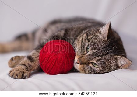 Cat Playing With Ball Of Red Yarn