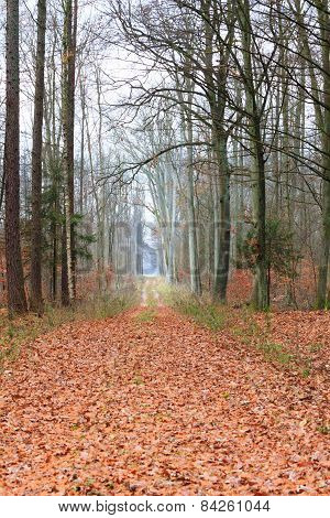 Country Road In The Forest On Misty Day