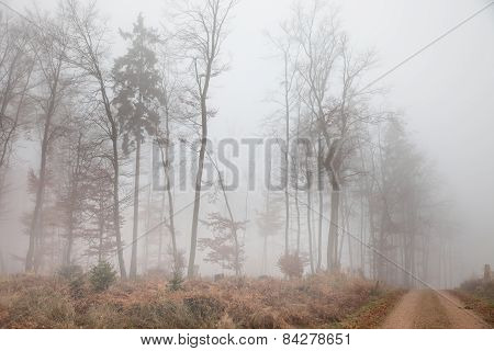 Foggy Autumnally Forest