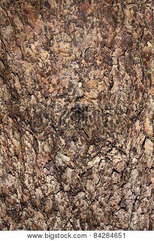 Coniferous Tree Bark