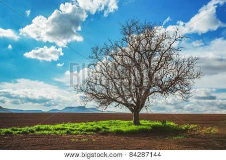 Empty Field,tree And Cloudy Sky
