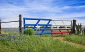 stock photo of texas star  - Bluebonnet field and a fence with gate along roadside in Texas spring - JPG