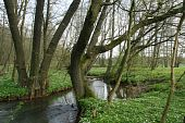 foto of brook trout  - Trout brook Rossel in Saxony - JPG