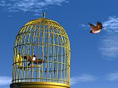 picture of caged  - Two blue finch birds - JPG