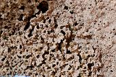 stock photo of termite  - This is a termite nests in macro - JPG