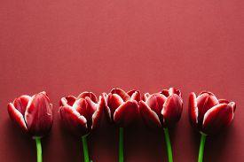 pic of marsala  - Five marsala colored tulips on marsala paper - JPG