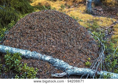 Big anthill in wild forest.