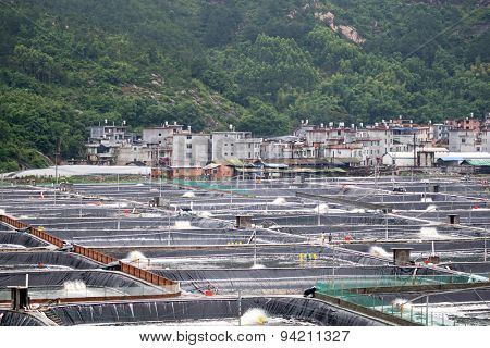 XIAPU, CHINA - JUNE 4, 2015: Man-made ponds filled with sea water houses millions of shrimps and prawns in a shrimp farm in Xiapu. Xiapu is a major player in the seafood farming industry in China.