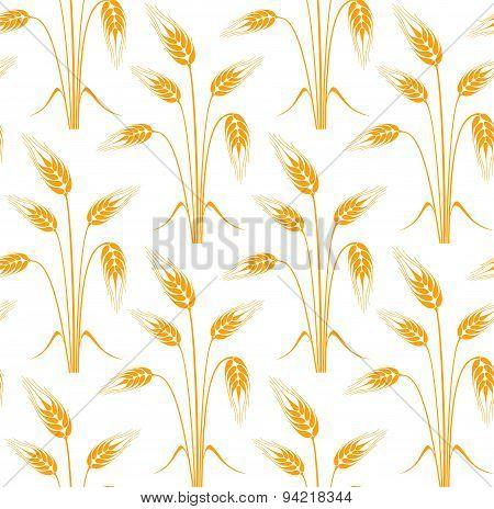Barley. Pattern