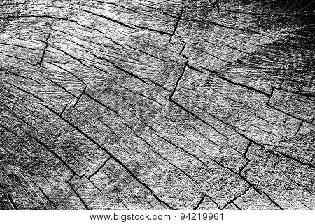 Cut Wood Trunk And Grain Pattern