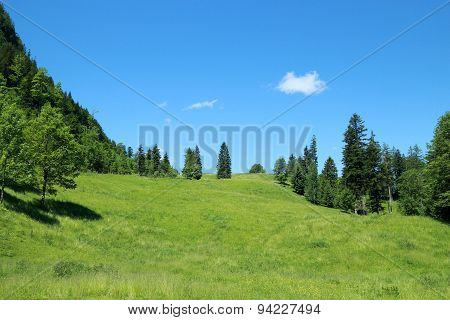 Field In Alps