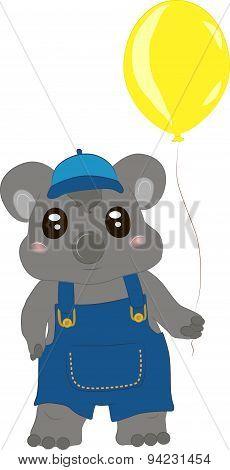 Koala baby boy
