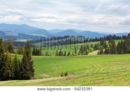 Landscape Of Green Meadows With Fir-trees And Mountains