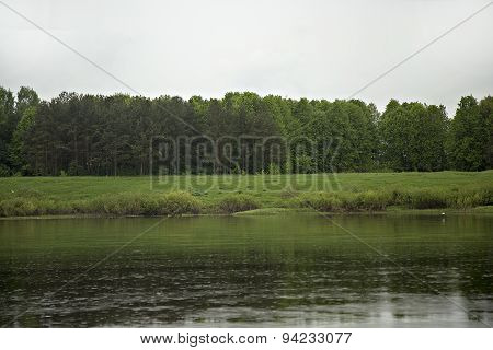 Green Forest Near Bank Of River