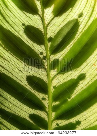 Leaves within leaves