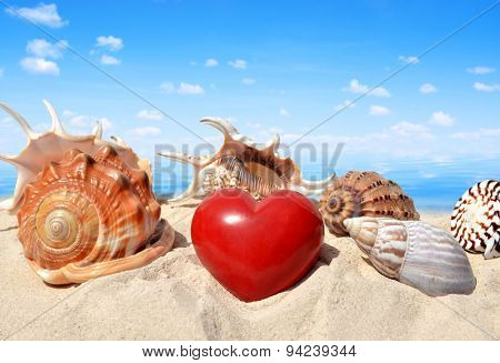 Conch shells with heart on beach