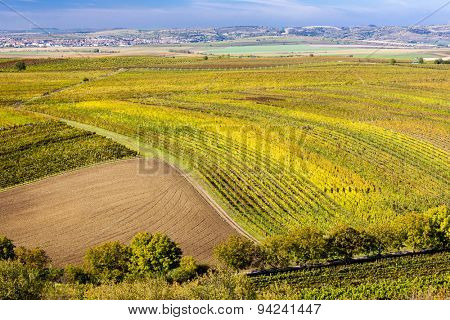 view of autumnal vineyards near Velke Bilovice, Czech Republic