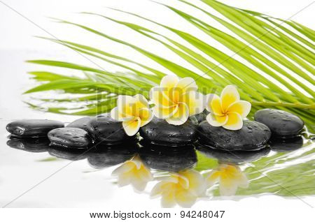 palm leaf background with zen stones and Frangipani