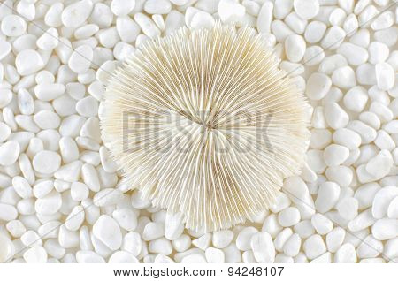 Shell and white stones
