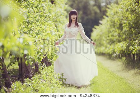 Woman In A White Dress In The Orchard