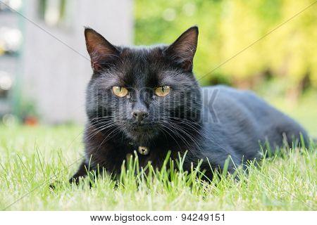 Black cat lying on a lawn
