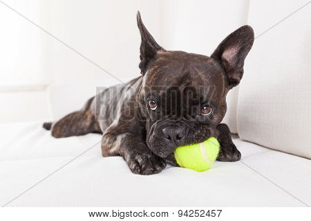 Dog Plays With Ball