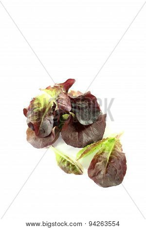 Delicious Red Lettuce