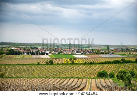 Winelands landscape at Laumersheim,Germany with fields of neatly trellised vines surrounding the village in a scenic agricultural view