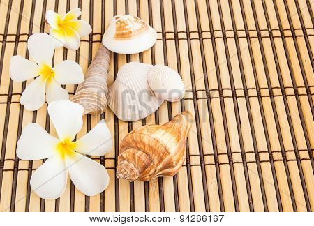 Tropical Plumeria And Sea Shell On Bamboo Mat