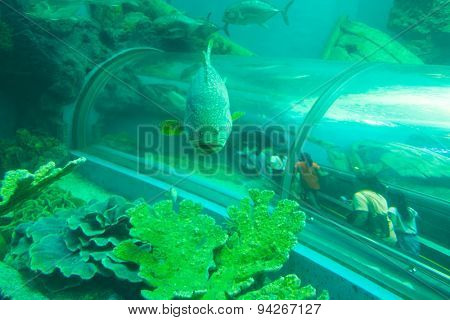 Tropical fishes at the Aquatic tunnel in the Rayong Aquarium, Thailand