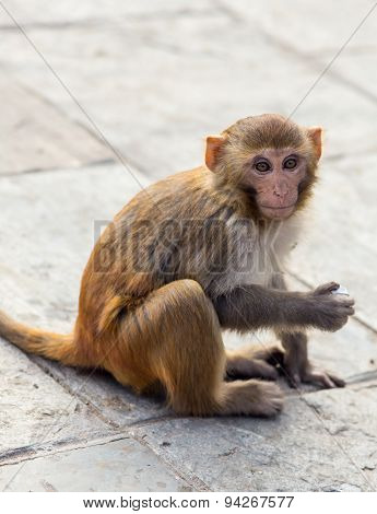 Little monkey in a Buddhist temple
