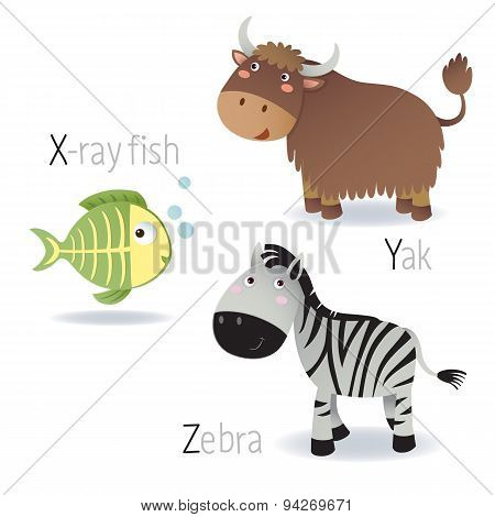 Alphabet With Animals From X To Z