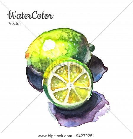 Vector hand painting abstract watercolor lemon illustration