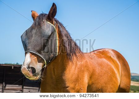 Horse With Fly Net.