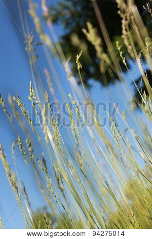 The grass on the background of blue sky