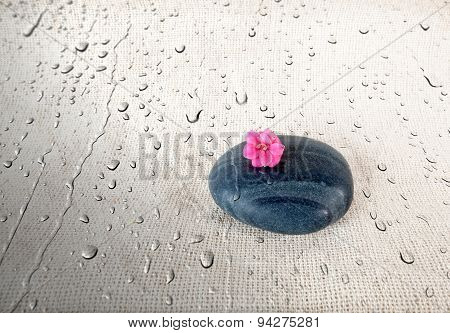 Black smooth stone with pink Flower on wet Sackcloth background