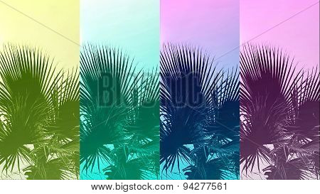 Abstract Color Background With Palm