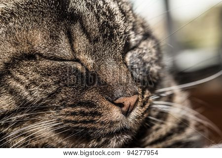 Cat With Closed Eyes
