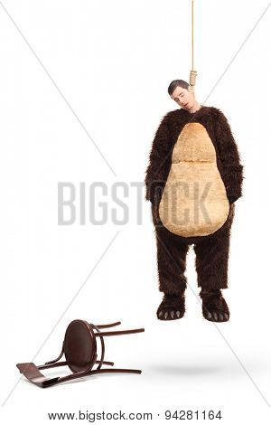 Full length portrait of a dead man in a bear costume hanging on a rope with fallen chair beside him isolated on white background