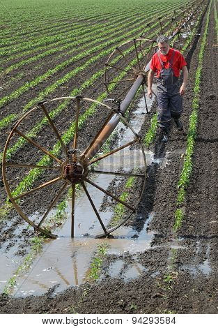 Agricultural Scene, Farmer In Paprika Field With Watering System