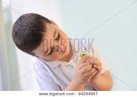 boy holds yellow chick on hand