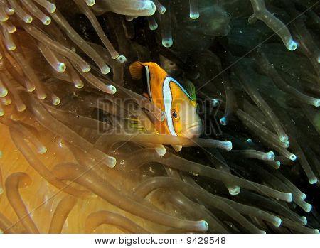 Mikronesien reef