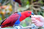 pic of tropical birds  - Parrot Tropical Bird with a Colroed Father  - JPG