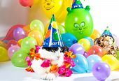 pic of hawaiian flower  - Black and white cat in animal party surrounded by colorful balloons - JPG