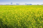 stock photo of potash  - Canadian potash mine on the prairies of Canada near a canola field - JPG