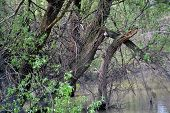 pic of early spring  - In early spring when the waters of the river are increased - JPG