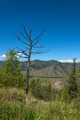 stock photo of vegetation  - Scenic top view on the valley between the mountains road hills covered with vegetation forest blue sky and clouds - JPG