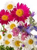 stock photo of wildflower  - beautiful bright bouquet of summer wildflowers with green leaves isolated on a white background - JPG