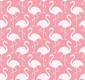 image of pink flamingos  - Flamingo - JPG