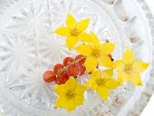foto of chloroplast  - yellow flowers in water and berries of a red currant - JPG